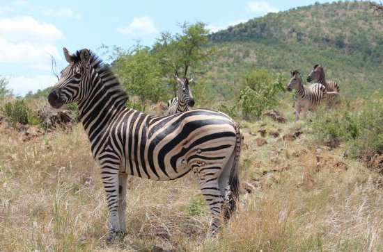 Pillanesburg Nationalpark Safari mit ...