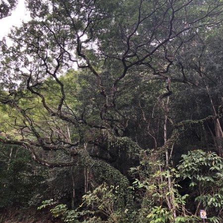 Waimea Valley: photo3.jpg