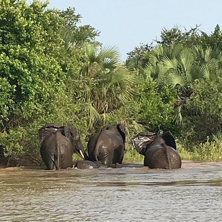 Selous Game Reserve, Τανζανία: photo0.jpg