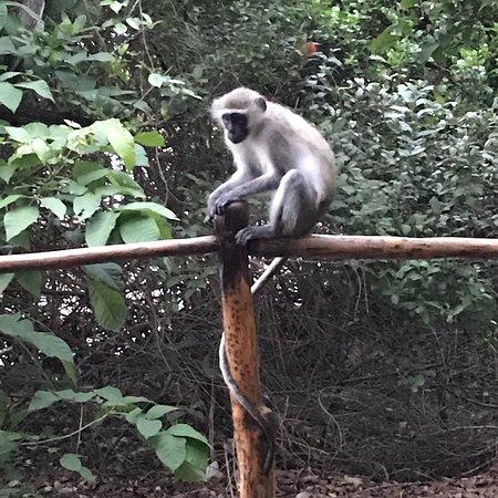 Selous Game Reserve, Τανζανία: photo2.jpg