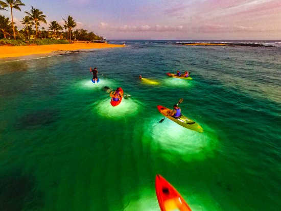 Moonlight Glass Bottom Kayak Tours
