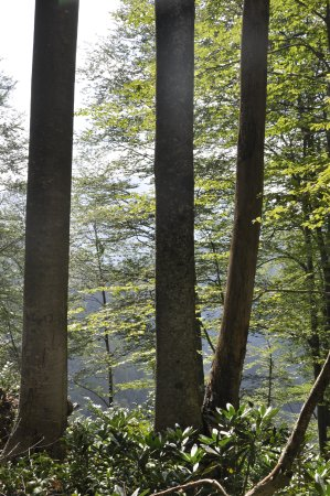 Adjara Region, Georgia: Mtirala National Park