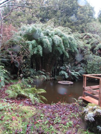 Te Popo Gardens: The lovely pond.