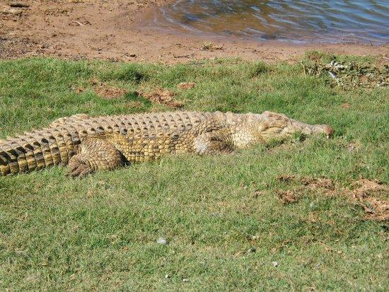 Paterson, Sydafrika: Crocodile