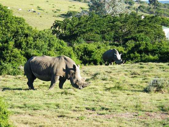 Paterson, Sydafrika: Rhino