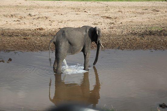 Tarangire National Park, Tanzania: Toa besök