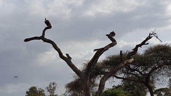 Tarangire National Park, Tanzania: Fåglar