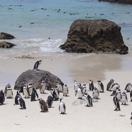 Cape Convoy: photo0.jpg