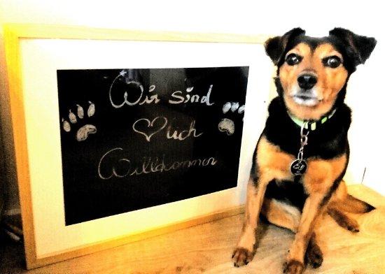 Koppl, Austria: Hunde Willkommen!