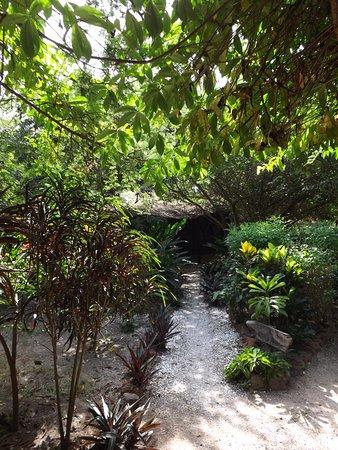 Gunjur, Gambia: Luscious greenery