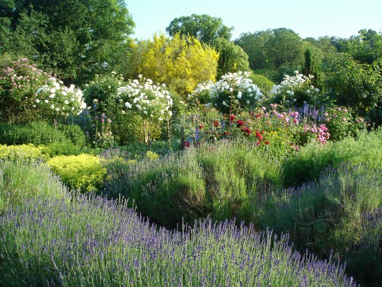 Great Yeldham, UK: Gardens in June