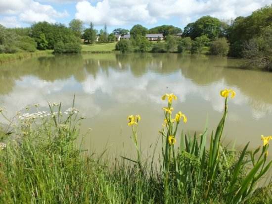 Ashwater, UK: We have a 1.5 acre coarse fishing lake - fishing is free when you stay with us