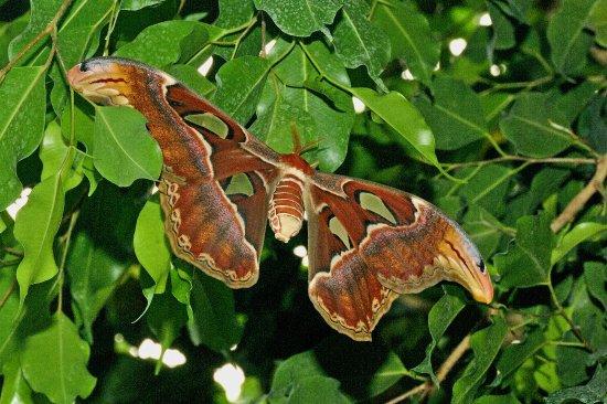 Kerzers, Szwajcaria: Schmetterling Papiliorama
