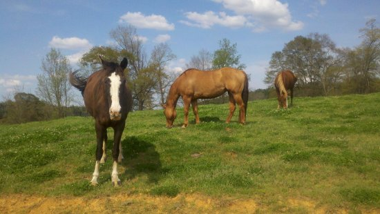 Vincent, AL: Horses love it at Shel-Clair Farms!