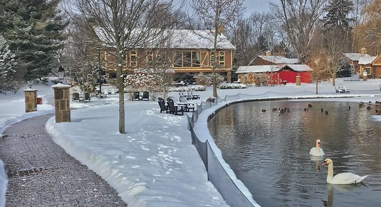Canton, OH: The Bistro in WInter with Swans