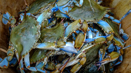 St. Michaels Harbour Inn, Marina & Spa : Be sure to enjoy some crabs in season- a Maryland delicacy!