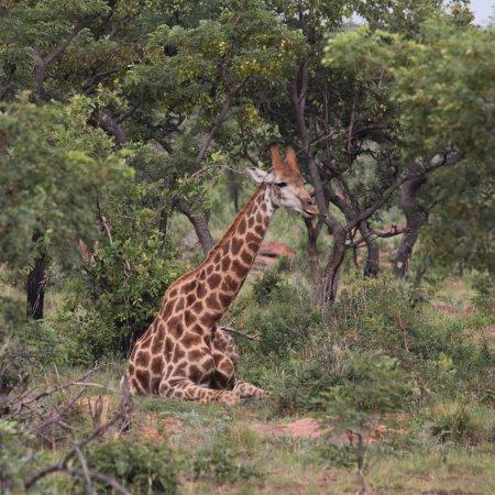 Welgevonden Game Reserve, แอฟริกาใต้: photo0.jpg