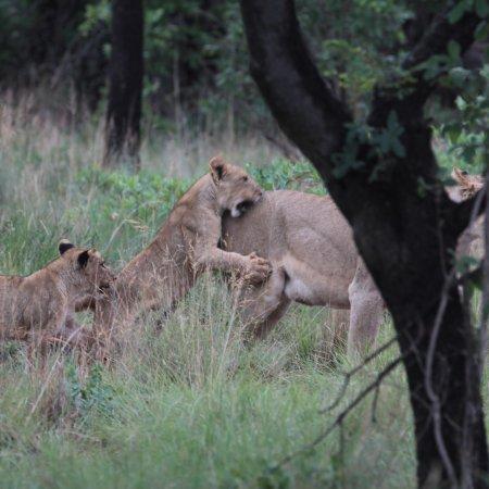 Welgevonden Game Reserve, แอฟริกาใต้: photo1.jpg