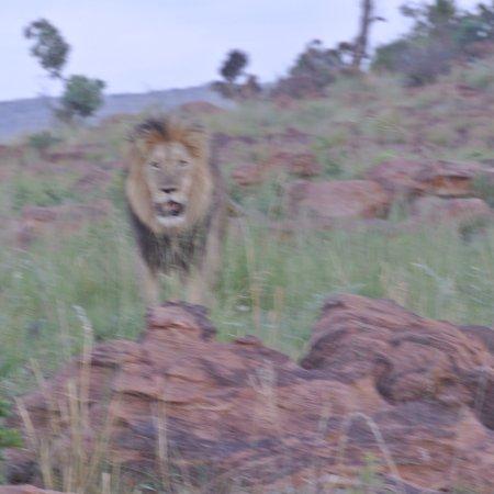 Welgevonden Game Reserve, แอฟริกาใต้: photo2.jpg