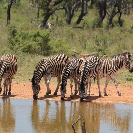 Welgevonden Game Reserve, แอฟริกาใต้: photo3.jpg