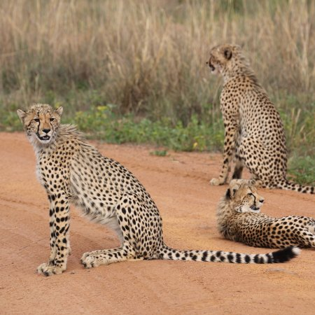 Welgevonden Game Reserve, Republika Południowej Afryki: photo4.jpg