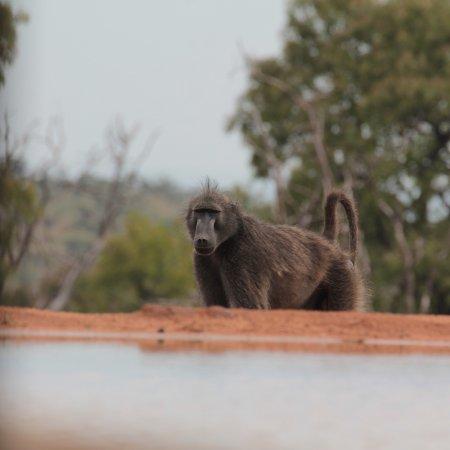 Welgevonden Game Reserve, Republika Południowej Afryki: photo5.jpg