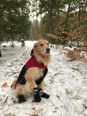 Glen, NH: Paco will take you out in the back woods and bring you right back to the Inn!