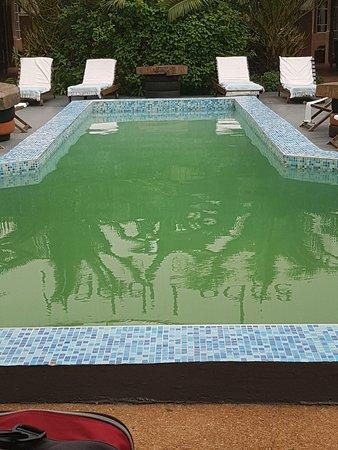 Madidi Lodge : green swamp like pool
