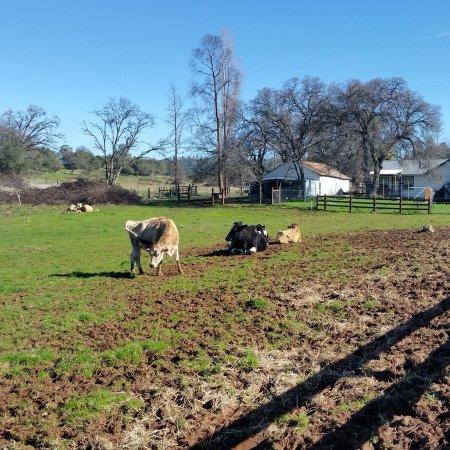 Grass Valley, CA: photo0.jpg