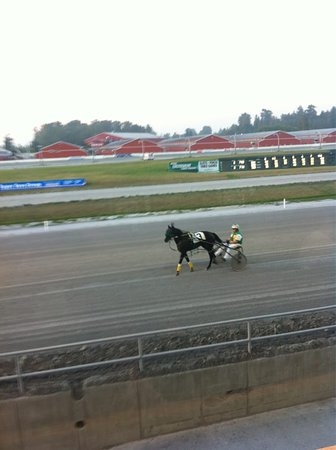 Surrey, Canada : Little Harness warm up!