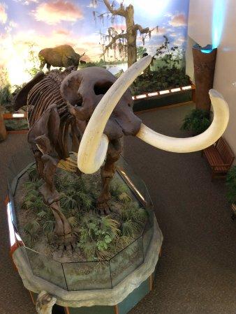 South Florida Museum and Bishop Planetarium: photo1.jpg