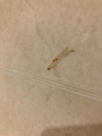 Staverton, UK: Brown stain on wall by toilet in bedroom...disgusting.