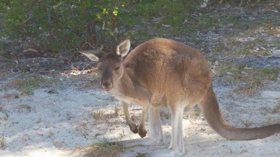 Preston Beach, Australia: 20180113_094054_large.jpg
