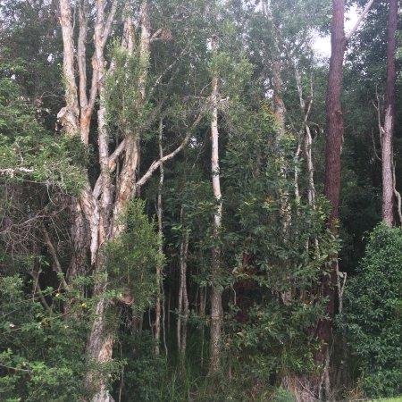 Tea Gardens, Australia: photo1.jpg