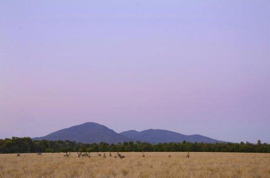 Sonnenuntergang Koalas und Kängurus...