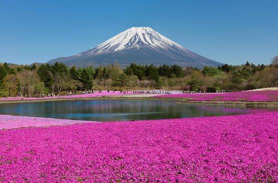 Dagstur till Mt Fuji: Shibazakura och ...