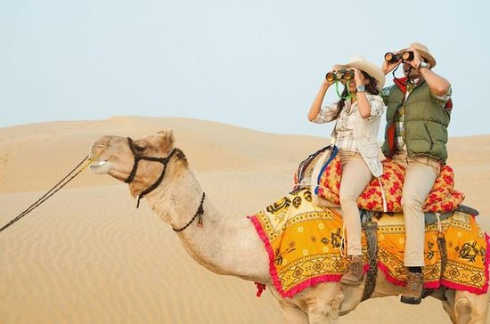 Private Full-Day Trip to Jaipur From...
