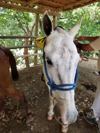 Artola, คอสตาริกา: My trail horse was very well-mannered and responsive
