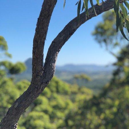 Tewantin, Avustralya: photo0.jpg