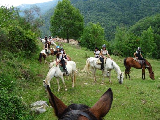TRAC Terápies I Rutes Amb Cavall