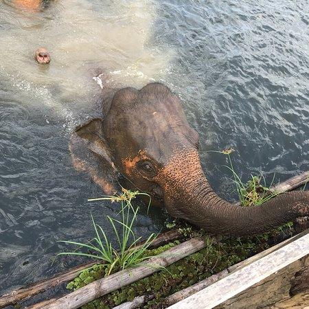 Sayaboury, Laos: photo4.jpg