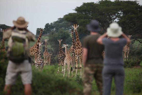 Kampala, Uganda: Or a walk in the park!