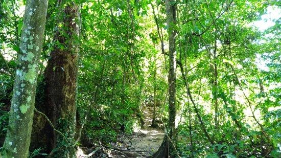 Poring, Malasia: 闊葉林山徑