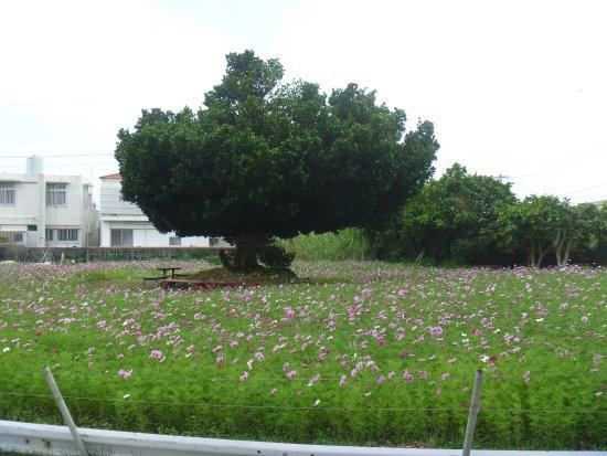 Uchimaudon Cosmos Field