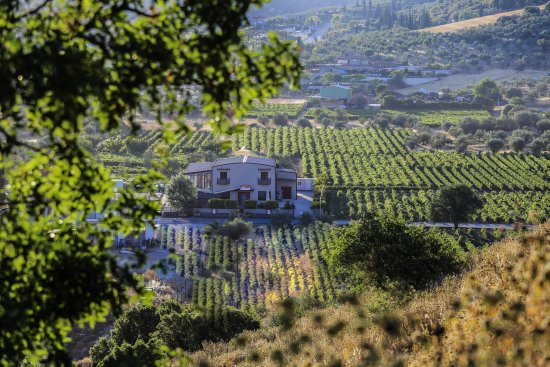 Nemea, Greece: The winery