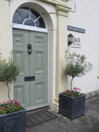 Croscombe, UK: Newly planted olive trees