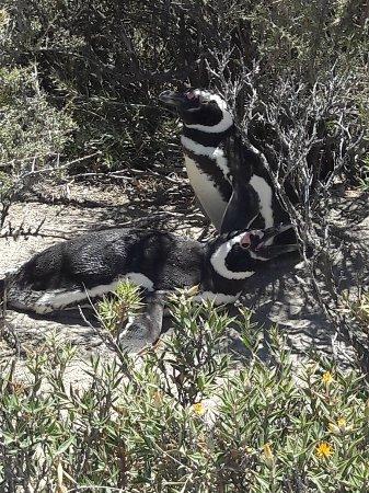 Punta Ninfas, Argentina: 20180116_132814_large.jpg