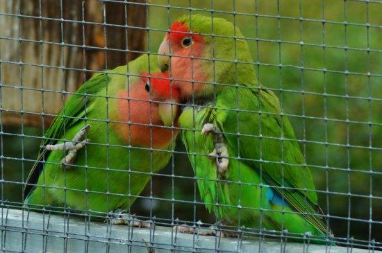 Ermenouville, France : jardin aux oiseaux