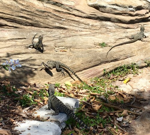 Manly, Australia: the Water Dragons
