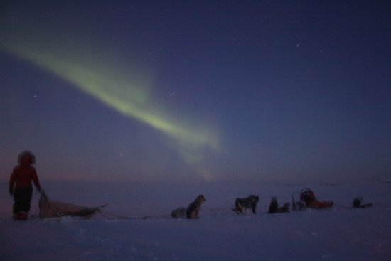 Finnmark, Noruega: Activités chiens de traîneau avec séjours + Raid a la demi ou journée ou sur plusieurs jours.